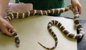 dumbest-snake2