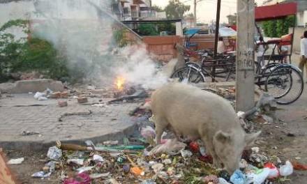 When Pig Fart in Bendigo, Victoria, Australia